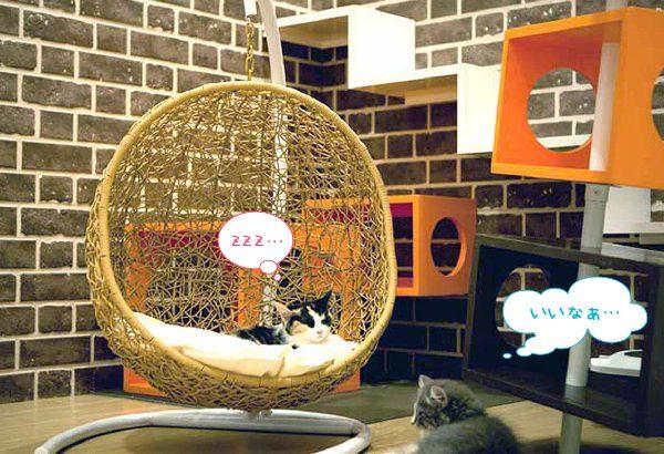 ミニチュアサイズのラタン調ハンギングチェアベッド Petmock(ペットモック) ◆ナチュラル