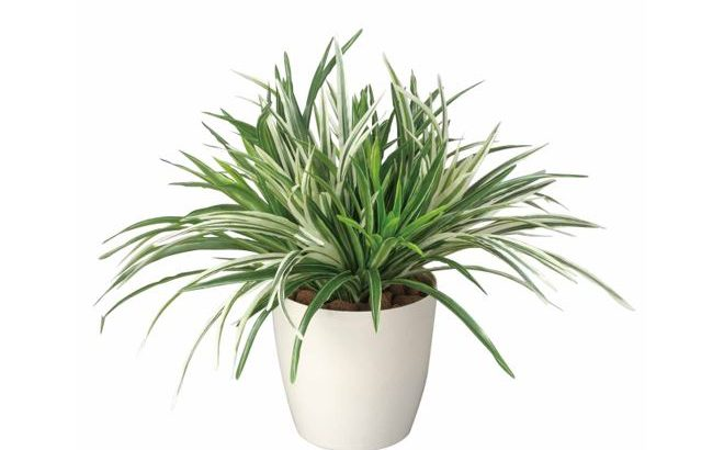 「ドラセナ ミックス」38cm 光触媒 人工植物/フェイクグリーン