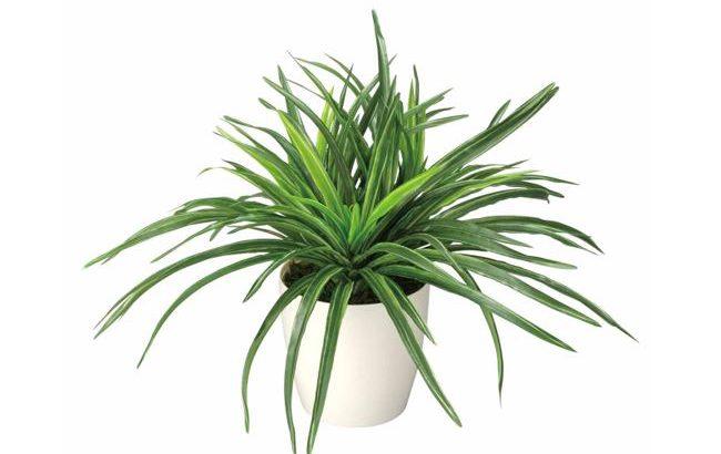 「ドラセナ」32cm 光触媒 人工植物/フェイクグリーン