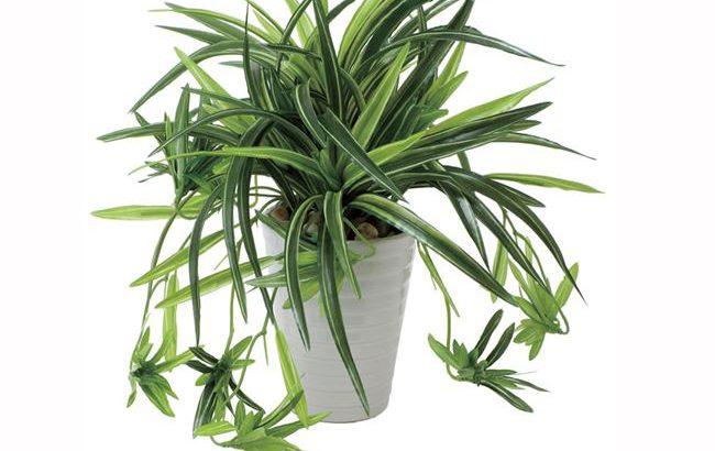 「ドラセナ 角ポット」30cm 光触媒 人工植物/フェイクグリーン