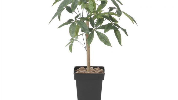 財をもたらす幸運の木「スリムパキラ」100cm 光触媒 人工植物/フェイクグリーン
