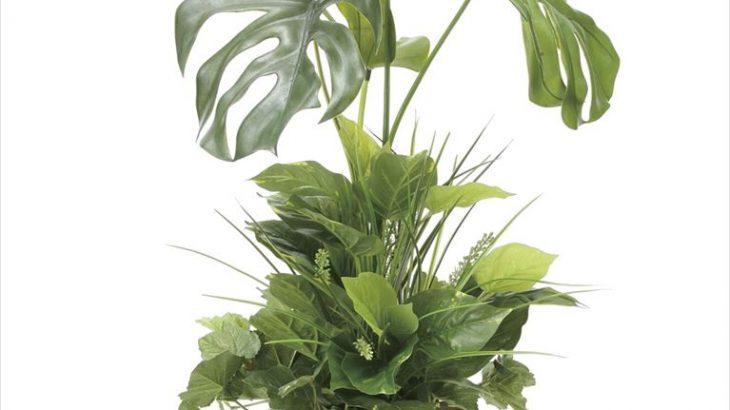 希望の光を導く「モンステラ」90 植栽付き 光触媒 人工植物/フェイクグリーン