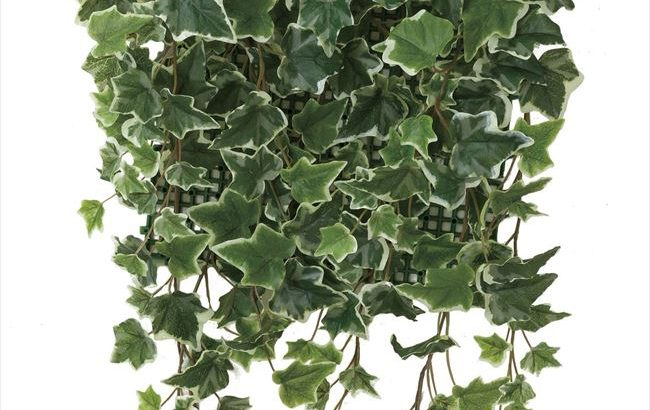 永遠の愛「アイビー」壁面緑化斑入 人工植物/フェイクグリーン
