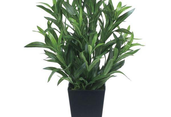 観葉植物/フェイクグリーン「スパイダー」高さ50cm 光触媒