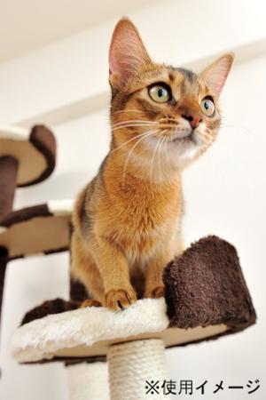猫の上下運動には欠かせないキャットタワー